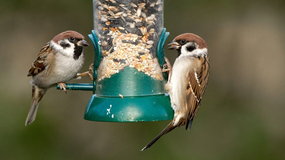 Feed the birds, but be aware of risks, say wildlife experts - BBC News