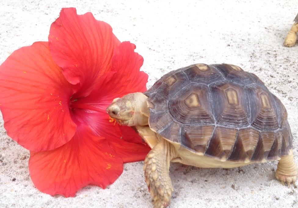 Happy, Healthy Eating | The Tortoise Garden