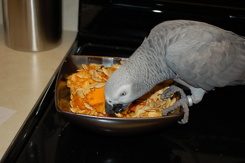 Unsafe Foods For Parrots