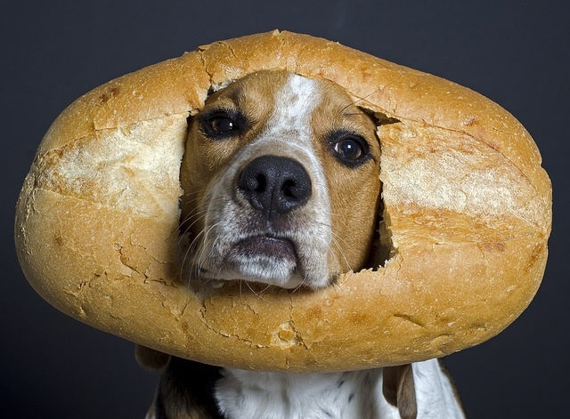 Dogs Eating Bread – Benefits and Effects of Feeding Bread to Your Dogs