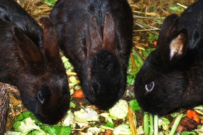 Can Bunnies Eat Gerbil and Hamster Food | Petsial
