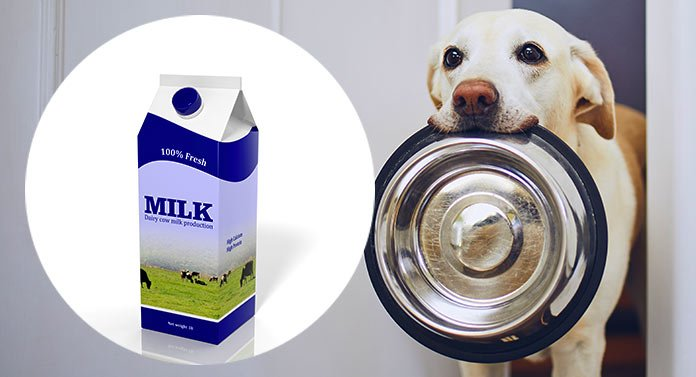 Can Dogs Drink Milk? And Which Milk Alternatives Can They Have?