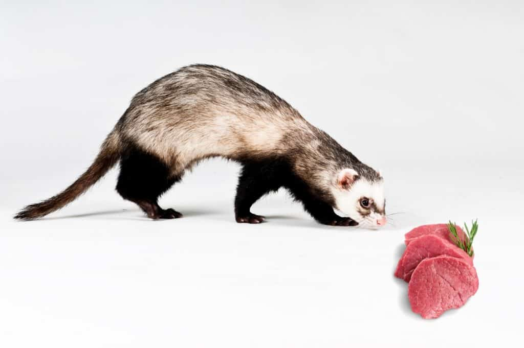Can Ferrets Eat Raw Chicken? [ Is It Safe For Them? ]