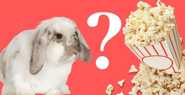 Can Rabbits Eat Popcorn? – Bunny Advice