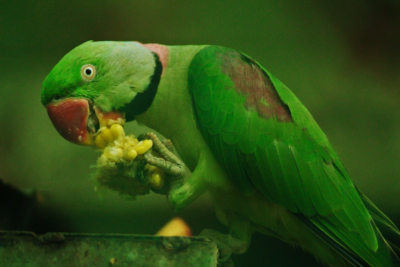 Can Parrots Eat Grapes? - Animal Hype