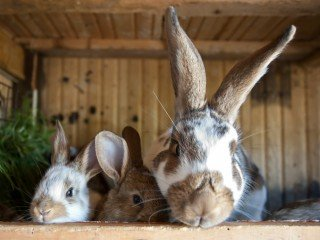 How to keep your rabbit warm in winter | Vets Now