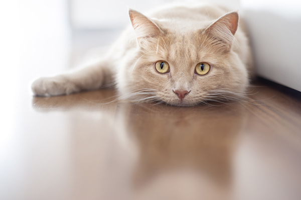 Cat Depression — Signs, Causes and How to Treat It - Catster