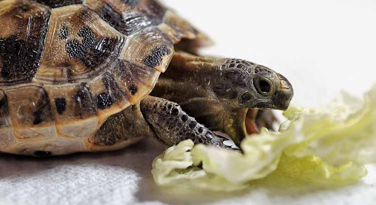 What Can Turtles Eat from Human Food? Including Food List – TurtleOwner.com