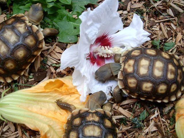 Pin on Tortoise Diet