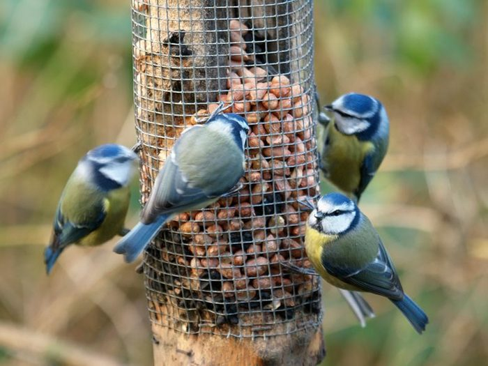 Attracting Birds to Your Feeder - Yard Envy