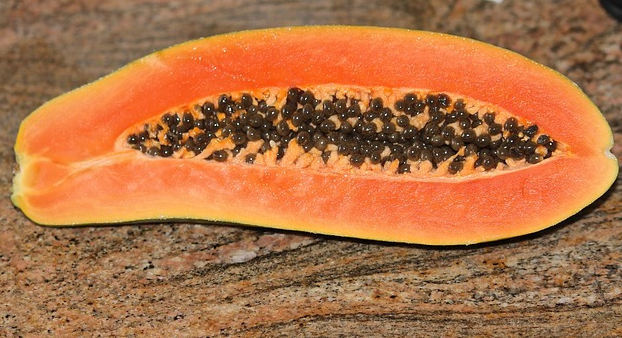 Can Dogs Eat Papaya: Fresh or Dehydrated? Is Papaya Good For Dogs?