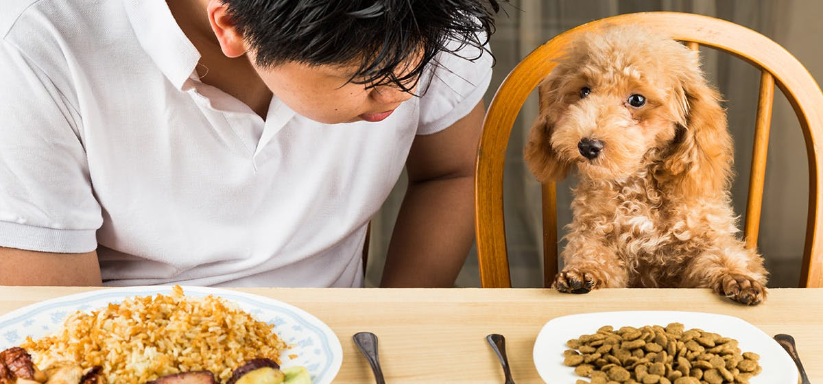 Can Dogs Taste Hot Food? - Wag!