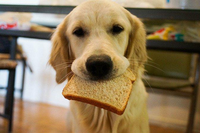 Can Dog Eat Banana Bread? - ohmylovelypets.com
