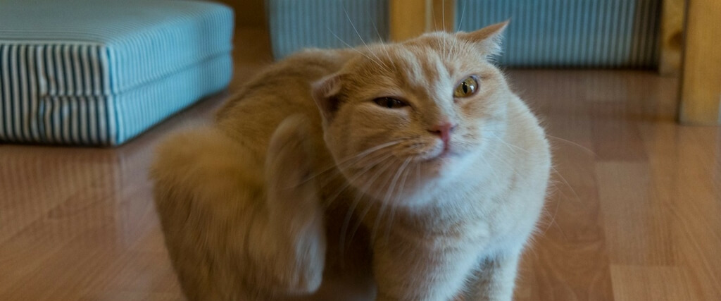 Is Year-Round Flea & Tick Prevention Necessary for Cats?