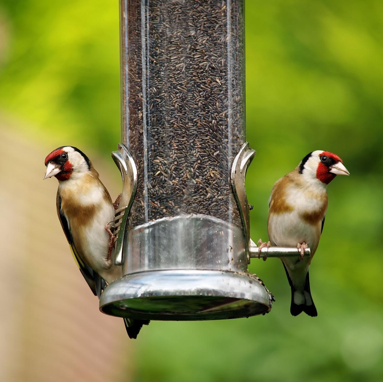 8 Kitchen Scraps Safe To Feed Birds – Wild Birds Leftover Food Uses