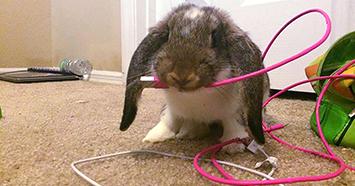 Top 9 best bunny proofing hacks