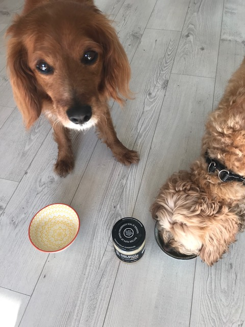 Want your dog to drink more water? Use bone broth! | Feast Wisely