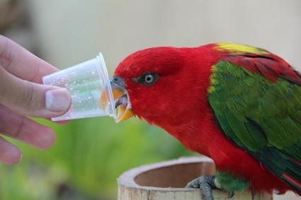 Can Parrots Eat Honey? — All About Parrots