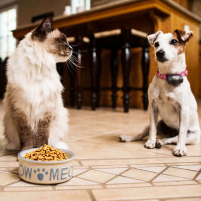 How to Keep Dogs & Cats Away From Each Other's Food   PetSafe®