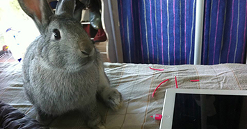 How to stop your bunny chewing electrical cables