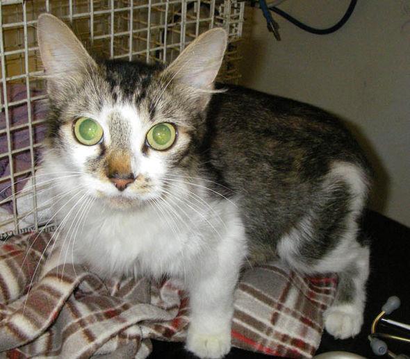 Cat owner let her kittens die from flea infestation | Nature | News |  Express.co.uk