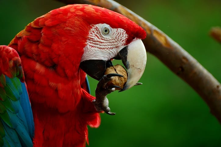 What Do Macaws Eat? - Parrot Website