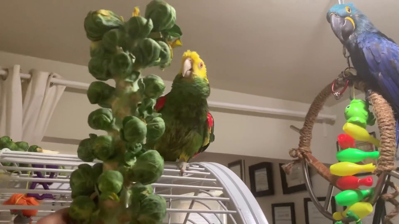 Eating alive! Brussel sprout stalk! - YouTube