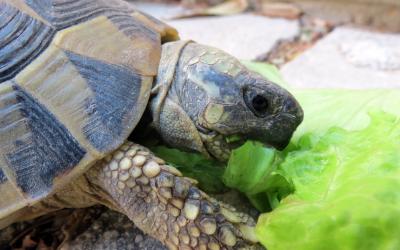 Feeding Box Turtles | VCA Animal Hospital