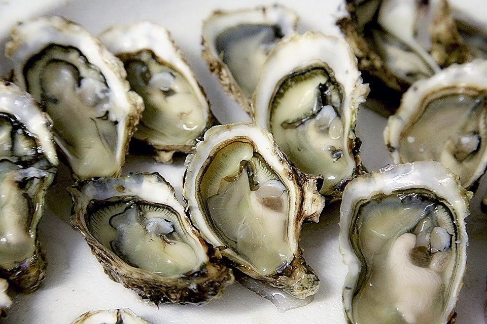 Interesting facts about oysters | Just Fun Facts