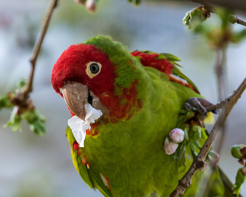 What Foods Can I Feed My Parrot? - Animed Direct