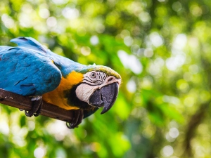 Can parrots eat pine nuts? Do they like them? – Critter clean out