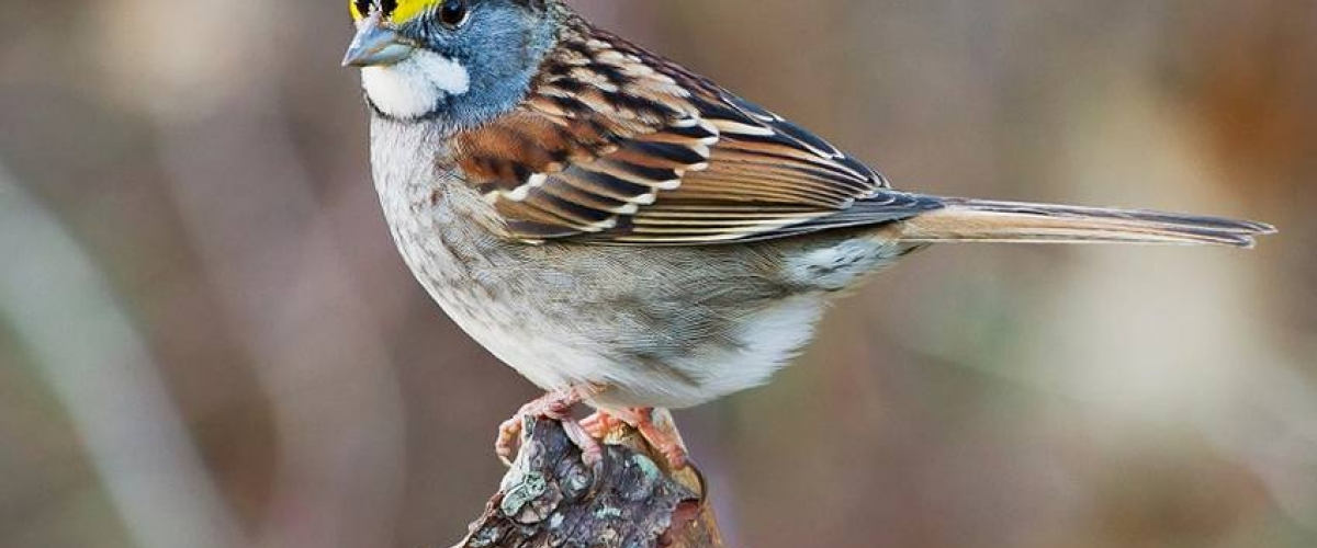 Killing two birds with one seed   Pesticide Action Network