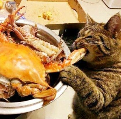 550 ...dinner is served... ideas in 2021   dinner is served, cats, crazy cats