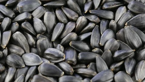 Sunflower Seeds Seeds Close Up. Stock Footage Video (100% Royalty-free) 21022558 | Shutterstock