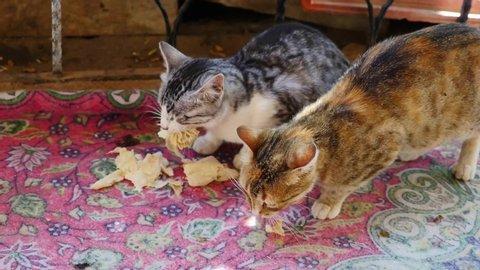 Cat Bread: stockvideomateriaal en -videoclips in 4K en HD   Shutterstock
