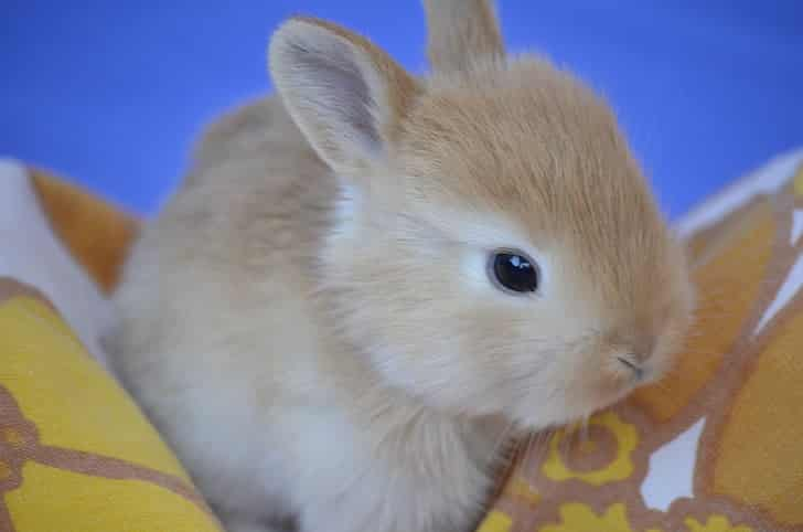 Can Rabbits Eat Bread? 3 Risks You Should Know!