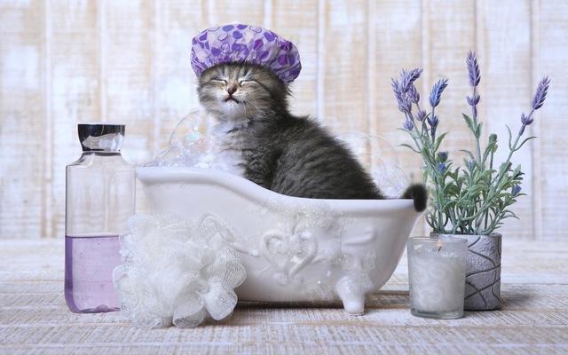 猫がお風呂嫌いな理由とは?治す方法やシャンプーする時のコツ | ねこちゃんホンポ