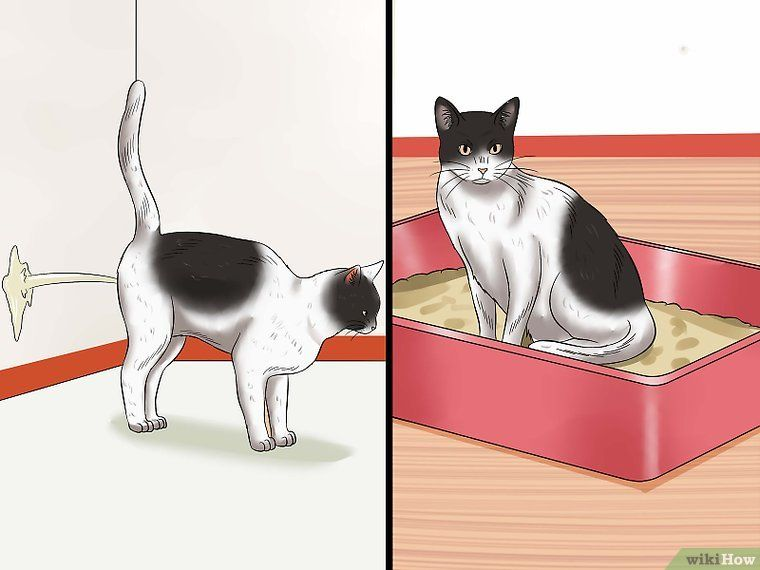 How to Stop a Male Cat from Spraying: 11 Steps (with Pictures) | Cat spray, Male cat spraying, Cat care