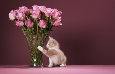 Are Roses Harmful to Cats?
