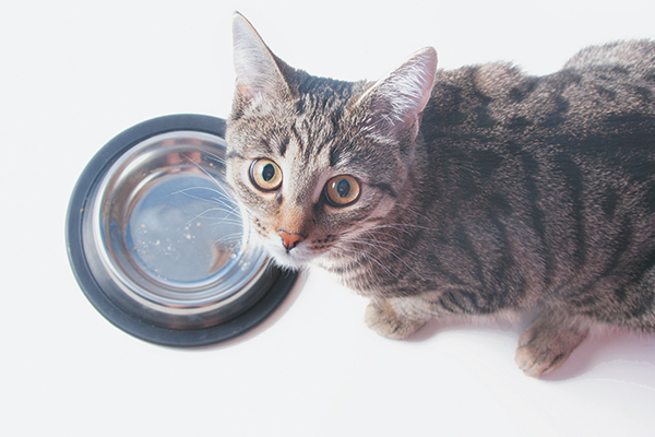 6 Cat Meow Sounds and What They Mean - Catster