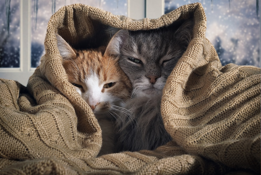 Do Cats Sense our Physical and Emotional Pain? • The Catnip Times