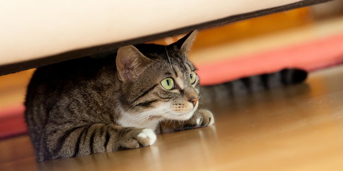 Anxious Cats | International Cat Care