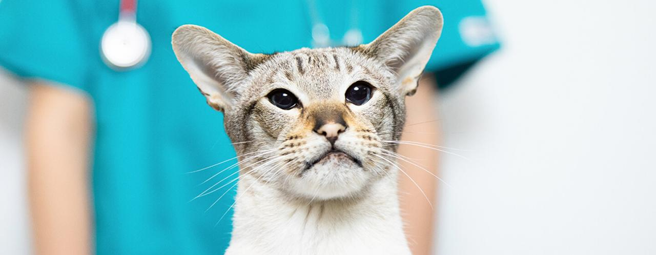 Cat Urinary Tract Problems - FLUTD & Cat Cystitis | Purina