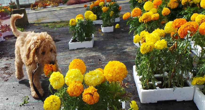Which plants are safe around children and pets - Buy trees, shrubs, perennials, annuals, house plants, statues and furniture