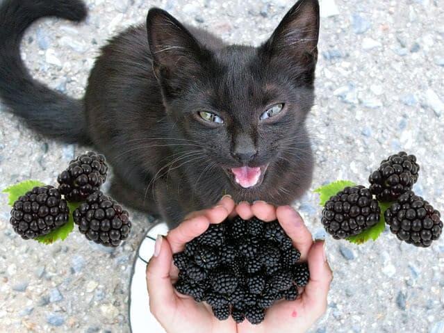 Can Cats Eat Balckberries? Waht About Balckberrypie?