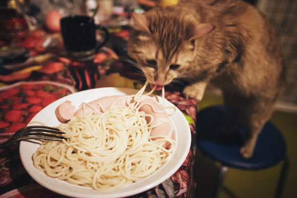 Can Cats Eat Noodles? Is It Healthy? (All You Need To Know) - Best Tips for Pets, Baby, Kittchen