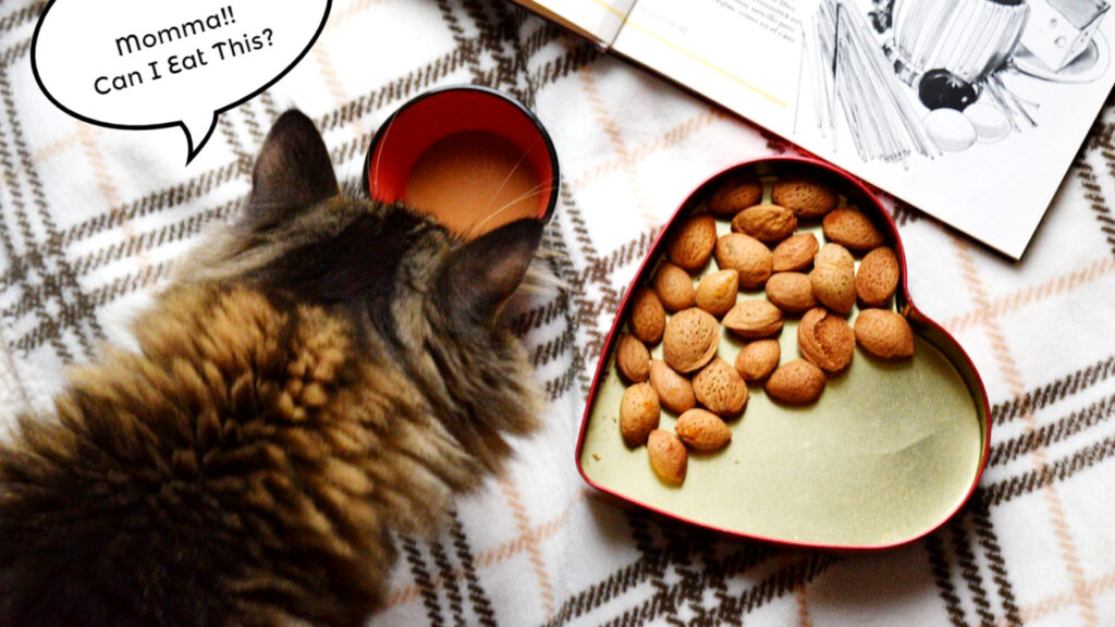 Can Cats Eat Nuts? Is It Toxic Or Safe For Cats?