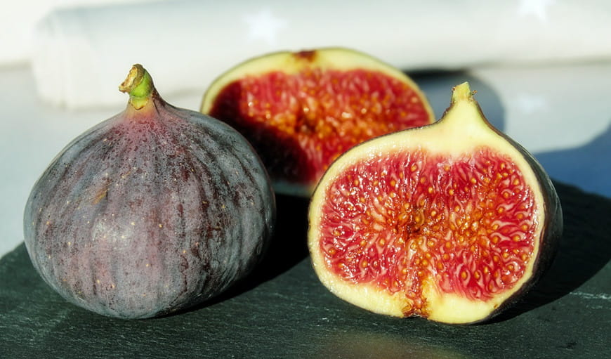 Can Dogs Eat Figs? | ebknows