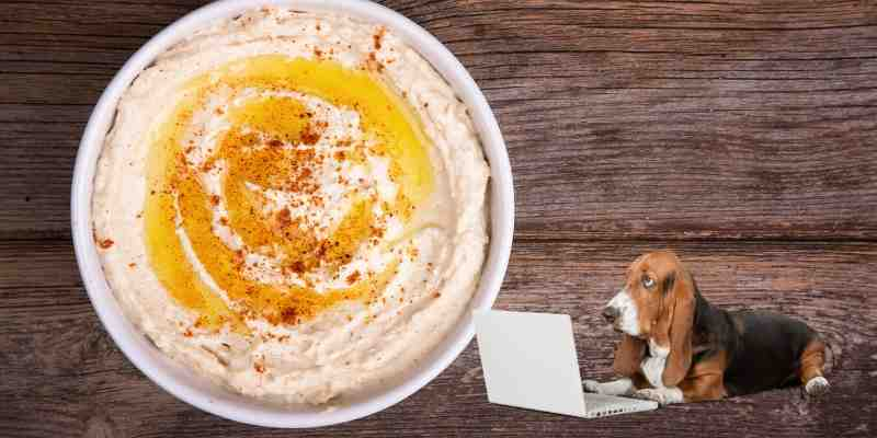 Can Dogs Eat Hummus & If Not What to Do When It's Happened?