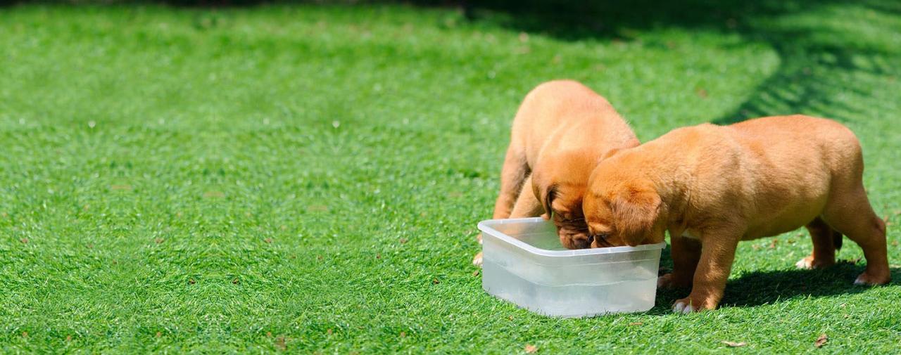 Can Dogs Taste Gatorade? - Wag!